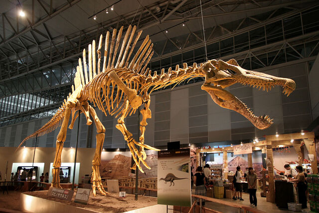 File:Spinosaurus skeleton.jpg