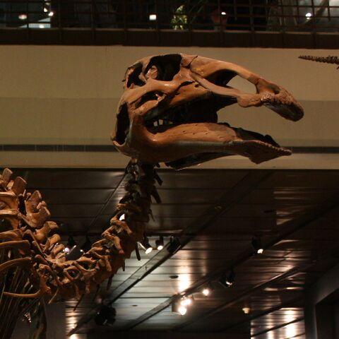 File:Edmontosaurus Skeleton Cropped.jpg