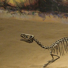 File:Ornitholestes Cropped.jpg