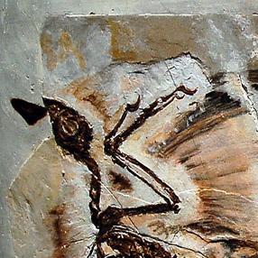 File:Microraptor fossil Cropped.jpg