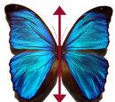Βιολογική Συμμετρία