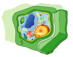 250px-Eukaryota cell strucutre