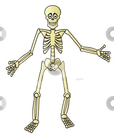File:Skeleton Bones.jpg