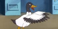 Dracula's duck