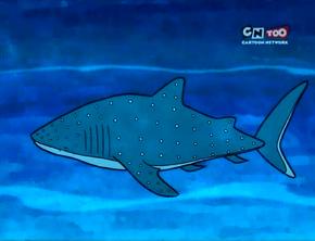 Whale (Shags To Riches)