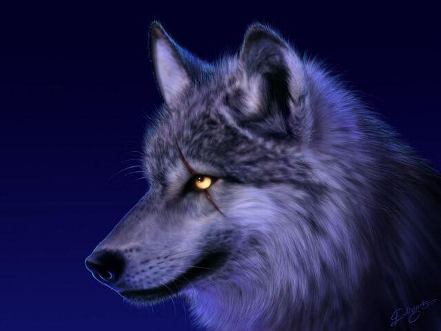 File:Wolf-07.jpg