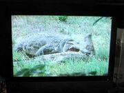 Audubon animal adventure preview