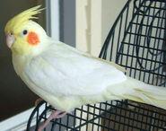Birdie-birdie