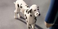 Gremlin the Dalmatian
