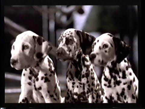 File:101 Dalmatians (Live Action) Teaser.jpg