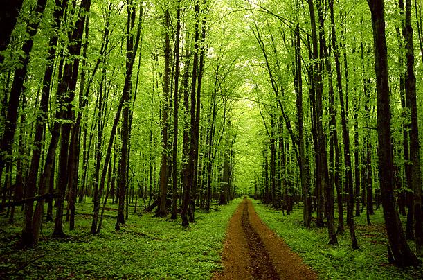 File:Forest green.jpg