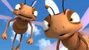 Bully Dragonflies (Maya the Bee)