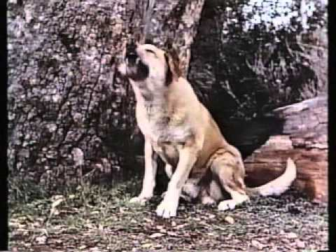 File:Old Yeller Preview.jpeg