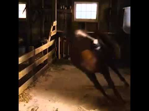 File:Horse fainting in Charlotte's Web.jpg