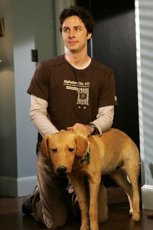 What Happened To Scrubs' Taxidermied Dog Rowdy, According ...