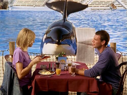 3x3 Lunch in front of killer whale