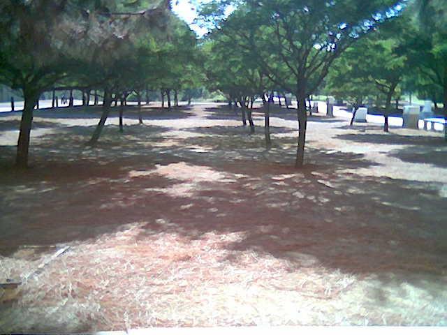 File:Summer Mastous 5.JPG