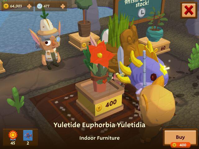 File:YuletideEuphorbiaYultidia.jpeg