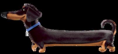 Buddy dog