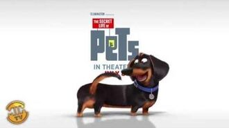 Meet Buddy - The Secret Life of Pets