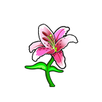 Common Japanese Lily