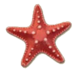 Collection Fixer Starfish