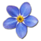 Collection Fixer Forget-me-not