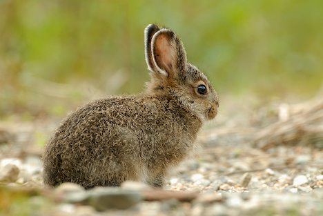 File:Hare.jpg