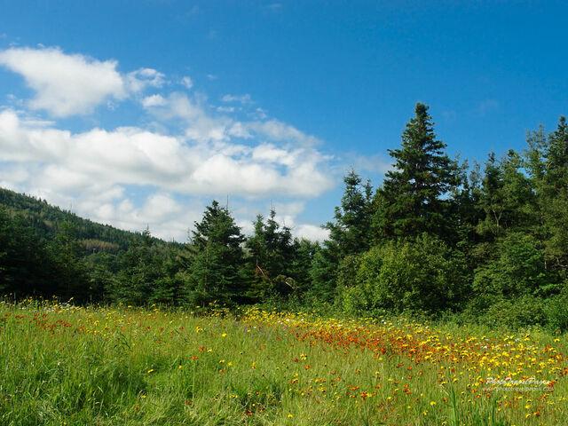 File:Meadow 4 1024.jpg