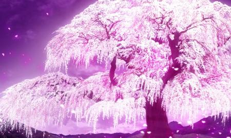 File:Magic tree.jpg