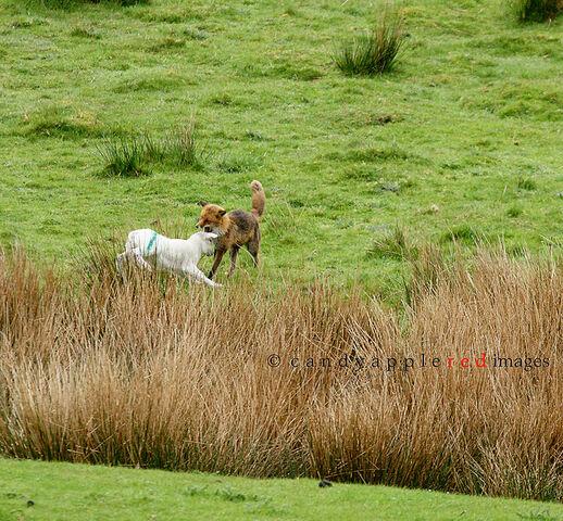 File:Tender Lamb Chops.jpg