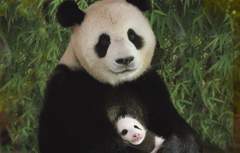 File:One cub per litter.jpg