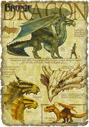 BronzeDragon