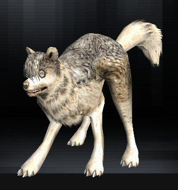 Wolf 02 1