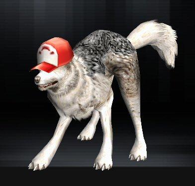 Wolf 10 1