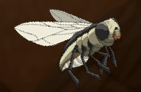 Bareback Sand Fly