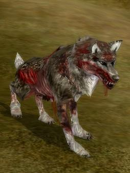 Loup gris du nid draconique wiki shaiya fandom powered - Photo de loup gris a imprimer ...