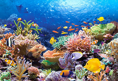 101511 coral reef fishes 15831