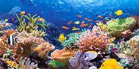 Coral Shiver