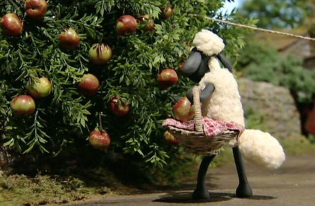 File:Shaun takes apples2.jpg