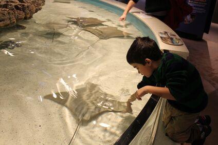 Jonah petting sting rays