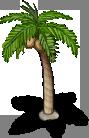 Palm Tree -1-
