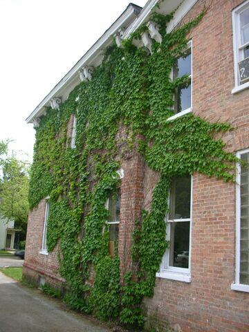 File:Waukegan 438 exterior north ivy.jpg