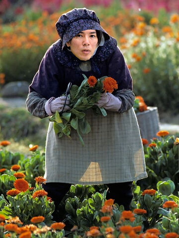 File:Hajime Isayama picking flowers on a sunny day of Spring.jpg