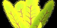 Beet Seed