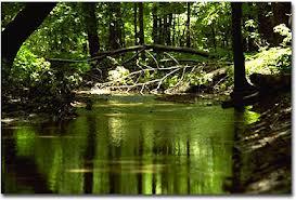 File:Woods.jpg