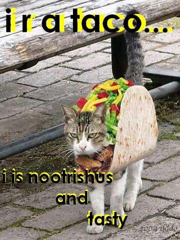 File:Taco-cat.jpg