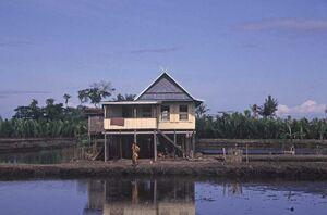 Wetland-house-lahan-basah-rumah-sulawesi-indonesia 1152 12777054294-tpfil02aw-14618