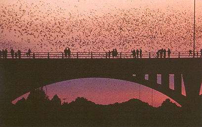 File:Congressavebridge bats.jpg