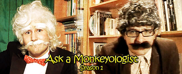 File:Ask a Monkeyologist Kauff Gustav Season 1 SilverWolfPet Andrei Constantinescu Majus Fietzek.jpg